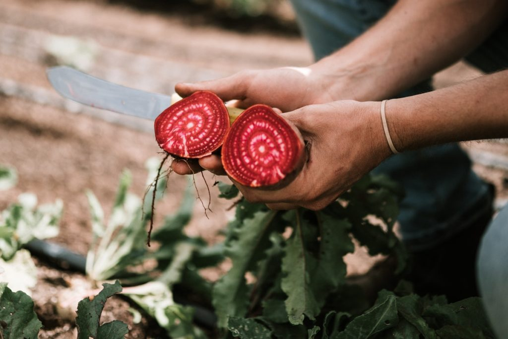 A farmer shows organic vegetables, grown in the effort to increase sustainability in the food industry.