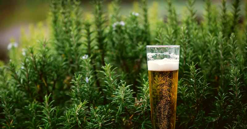 This photo shows a beer standing in a beer garden.